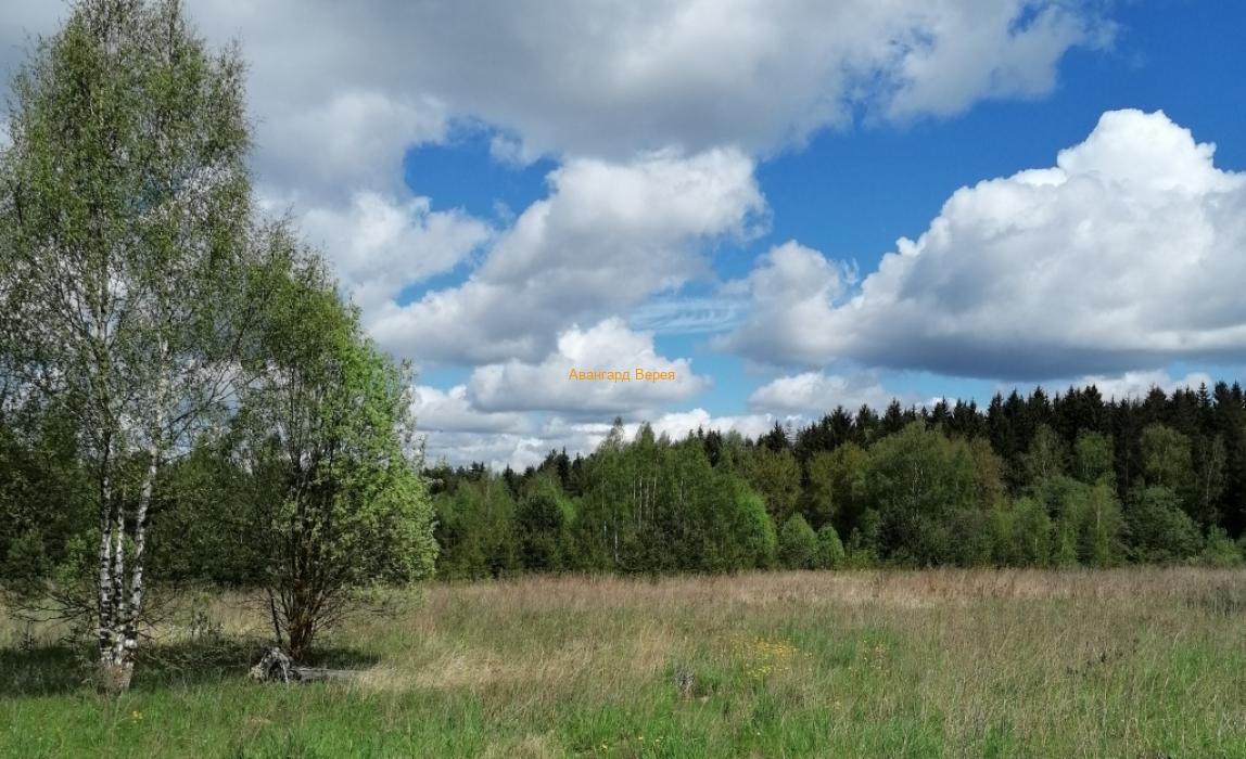 Лес – чистый воздух и не только